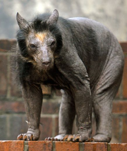 Anna - Gaspar, that's not a werewolf, that's a shaved bear. Gaspar - What? No...it's a werewolf from mankind's nightmares.
